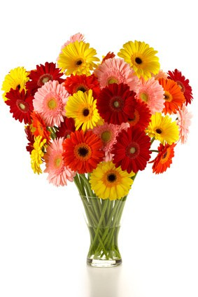 bouquet of different colored gerbera
