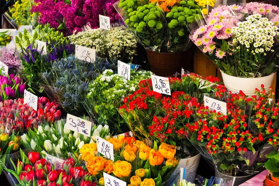variety of flowers for sale
